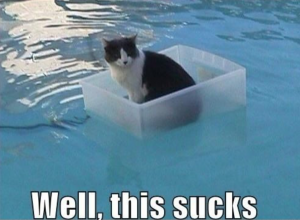 cat in the water saying this sucks